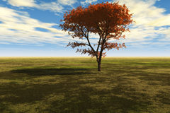 Majestic Maple Tree. Illustration of a colorful maple tree isolated against the sky and landscape royalty free stock image