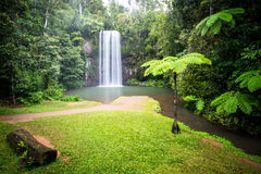 Majestic Millaa Millaa Waterfall Royalty Free Stock Photos