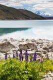 Majestic mountain with llupins blooming, Lake Tekapo, New Zealand Stock Photo