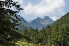 Majestic mountain top overgrown with coniferous forest, valley and glade, Maliovitza, Rila mountain. Bulgaria Royalty Free Stock Images