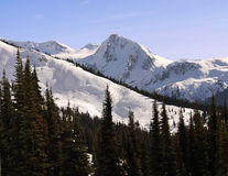 Majestic Mountains. Snow covered majestic mountains, ski slopes and high altitude pine forest Royalty Free Stock Photos