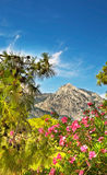 Majestic mountains,flowers and pine-tree. Royalty Free Stock Photo