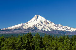 Majestic Mt. Hood. Snow capped Mt. Hood rising high above a forest royalty free stock images
