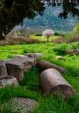 Majestic nature and columnar garden in Ephesus, Selcuk, Turkey. Majestic nature and columnar garden in Ephesus, Selcuk, Izmir, Turkey. Old ruins in nature stock image
