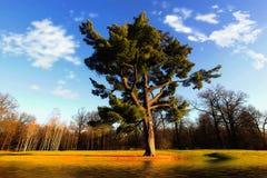 Majestic oak tree Royalty Free Stock Images
