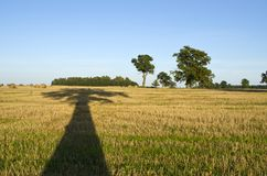 Majestic  oak tree shadow on harvested agriculture field Stock Images
