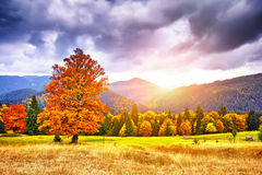 Majestic particolored forest with sunny beams. Natural park. Dra Royalty Free Stock Photo