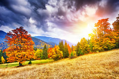 Majestic particolored forest with sunny beams. Natural park. Dra Royalty Free Stock Images