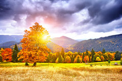Majestic particolored forest with sunny beams. Natural park. Dra Stock Image