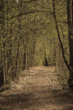 Majestic path Stock Images