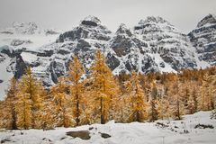 Majestic peaks in autumn colors around Larch valley, Canada. Fall colors photography, hiking trail around moraine lake, banff national park royalty free stock image
