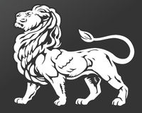 Proud Lion. Majestic, proud lion standing with chin raised.  A symbol of royalty, leisure, pride, and luxury Royalty Free Stock Images