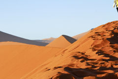 The majestic red dune. Shot in Deadvlei Royalty Free Stock Photos