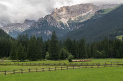 Majestic scenery of rocky mountains at golden sunset in Dolomites National Park Stock Photos