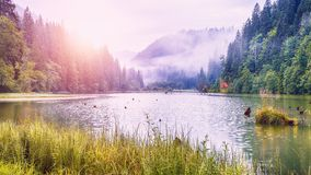 Majestic summer view of mountain lake Lacul Rosu or Red Lake or Killer Lake. Rotten tree trunks. Logs coming out of the water. Harghita County, Eastern stock image