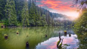 Majestic summer view of mountain lake Lacul Rosu or Red Lake or Killer Lake. Rotten tree trunks. Logs coming out of the water. Harghita County, Eastern royalty free stock image