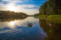 Majestic  at sunset on the lake Royalty Free Stock Photos