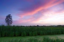 Majestic sunset Stock Images