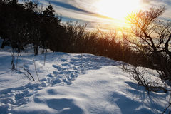 Majestic sunset in the winter mountain landscape. Dark tone. Royalty Free Stock Photo