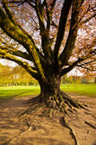 Majestic tree. Majestic old tree in a public park Stock Photo