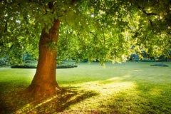 Majestic Tree Royalty Free Stock Image