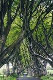 Majestic tree alley Stock Photo