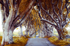 Majestic tree alley Royalty Free Stock Images