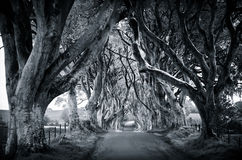 Majestic tree alley Stock Images