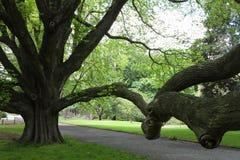 Majestic tree Royalty Free Stock Photography