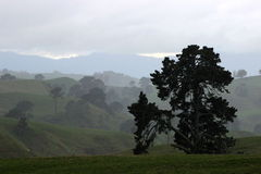 Majestic tree in Hobbiton. Green hobbiton hills with scary old tree in the rainy wheather Stock Photography