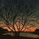 Majestic tree silhouette at sunset Royalty Free Stock Photography