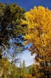 Majestic Trees in Autumn Season. Majestic Mountain Autumn Trees in Sierra Foothills, California Stock Photo