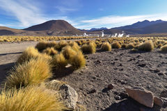 Majestic view of geysers field seen  from afar just after sunris. E Stock Photos