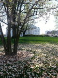 A majestic view. Green grass, beautiful trees and a big white house Royalty Free Stock Photos
