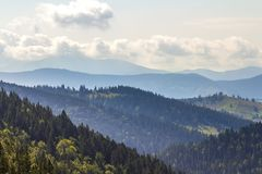 Majestic view of magnificent Carpathian mountains, densely covered with green forest, Ukraine. Foggy mountain ridges in distance,. Soft sunshine, bright sky Stock Photos