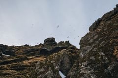 Majestic view of scenic rocks with snow and birds flying in sky, iceland,. Raudfeldsgja gorge stock photography