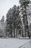 Majestic view of snowy  trees and bench in winter park, Bankya. Sofia, Bulgaria Stock Photography