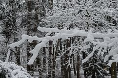 Majestic view of snowy  trees in winter park, Bankya. Sofia, Bulgaria Royalty Free Stock Photography