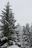 Majestic view of snowy  trees in winter park, Bankya. Sofia, Bulgaria Royalty Free Stock Photo