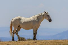 Majestic Wild Horse in Summer Stock Photography