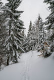 Majestic winter forest Royalty Free Stock Photography