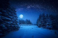 Majestic winter forest Stock Photos