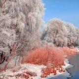 Majestik zimy scena Zdjęcia Stock