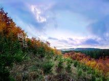 Majestueus de herfstbos met een hert-tribune stock foto