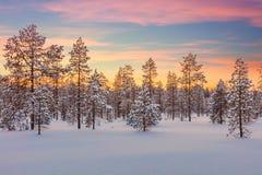 Majestueus de winterlandschap - zonsondergang, bos, bomen en sneeuw stock afbeeldingen