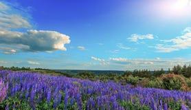 Majestueus landschap met prachtig bloeiend gebied en perfecte hemel stock afbeeldingen