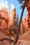 Majestueuze Kloof in Bryce Canyon Formations Of Hoodos geology Reis nave royalty-vrije stock fotografie
