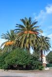 Majestueuze palm Royalty-vrije Stock Afbeeldingen