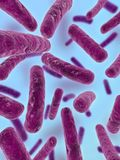 Major bacteria. 3d rendered close up of some isolated major bacteria Royalty Free Stock Photography