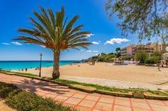 Majorca, beach promenate and palm in Cala Ratjada. Beautiful sandy beach Son Moll in Cala Rajada on Mallorca island, Spain Mediterranean Sea royalty free stock image